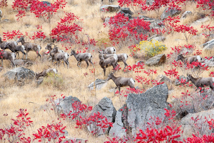 Autumn Gathering at CharlesCockburn.com